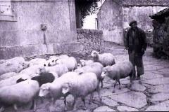 Ovellas e Jose do veciño